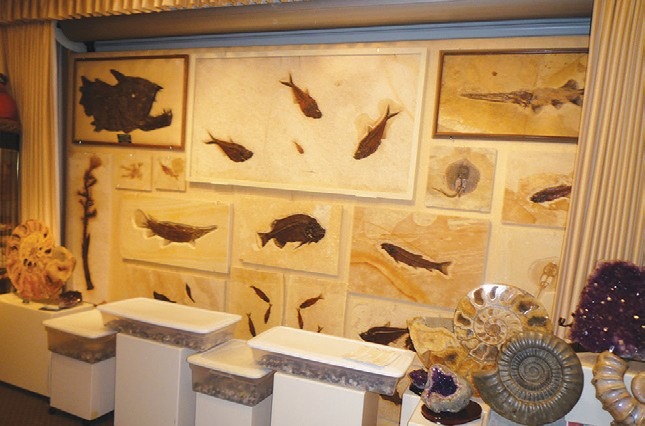 The Roynon museum has over 4,000 specimens from Keith Roynon's personal collection.