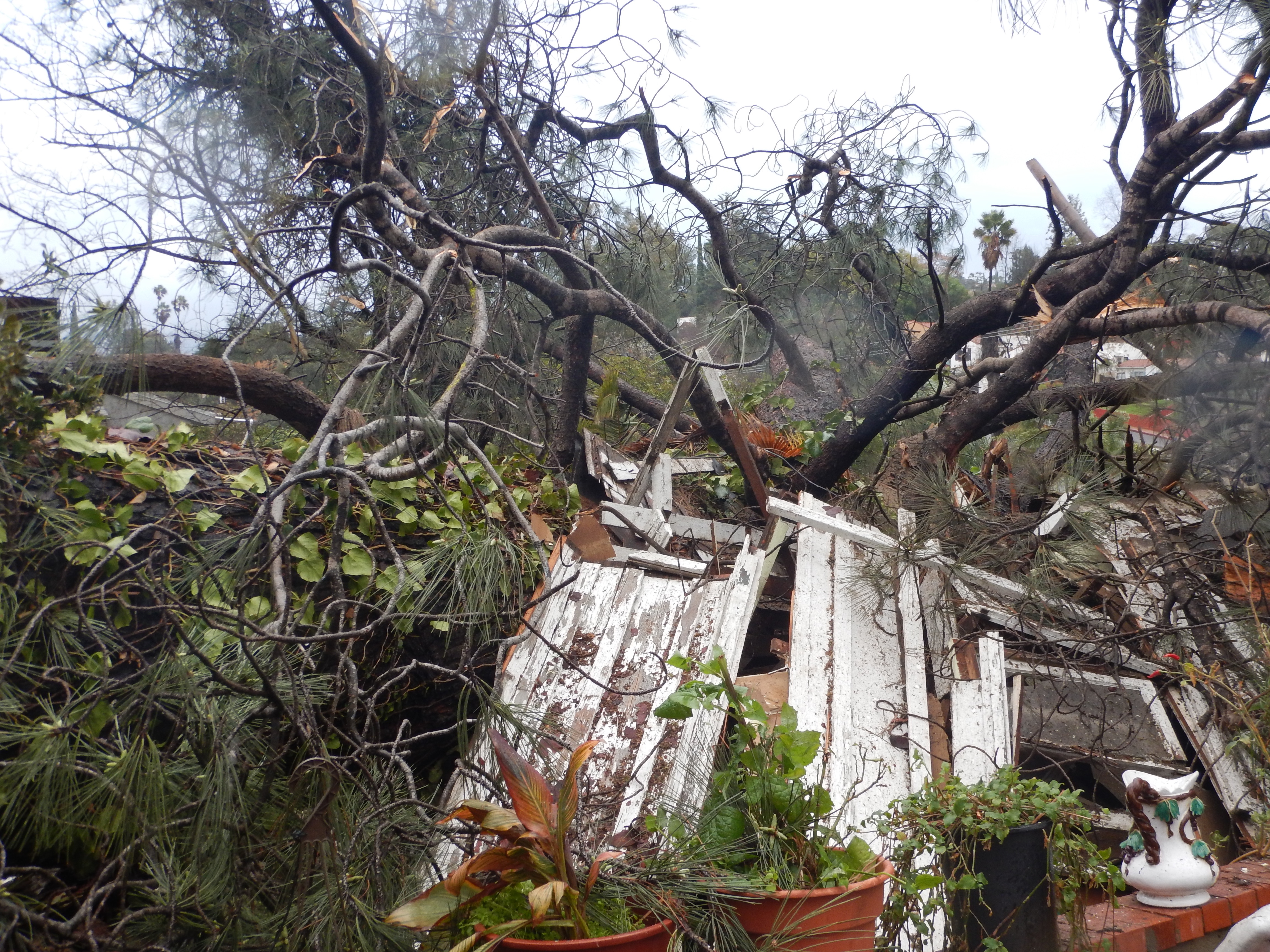 Historic Cottage destroyed by fallen Torrey Pine Tree