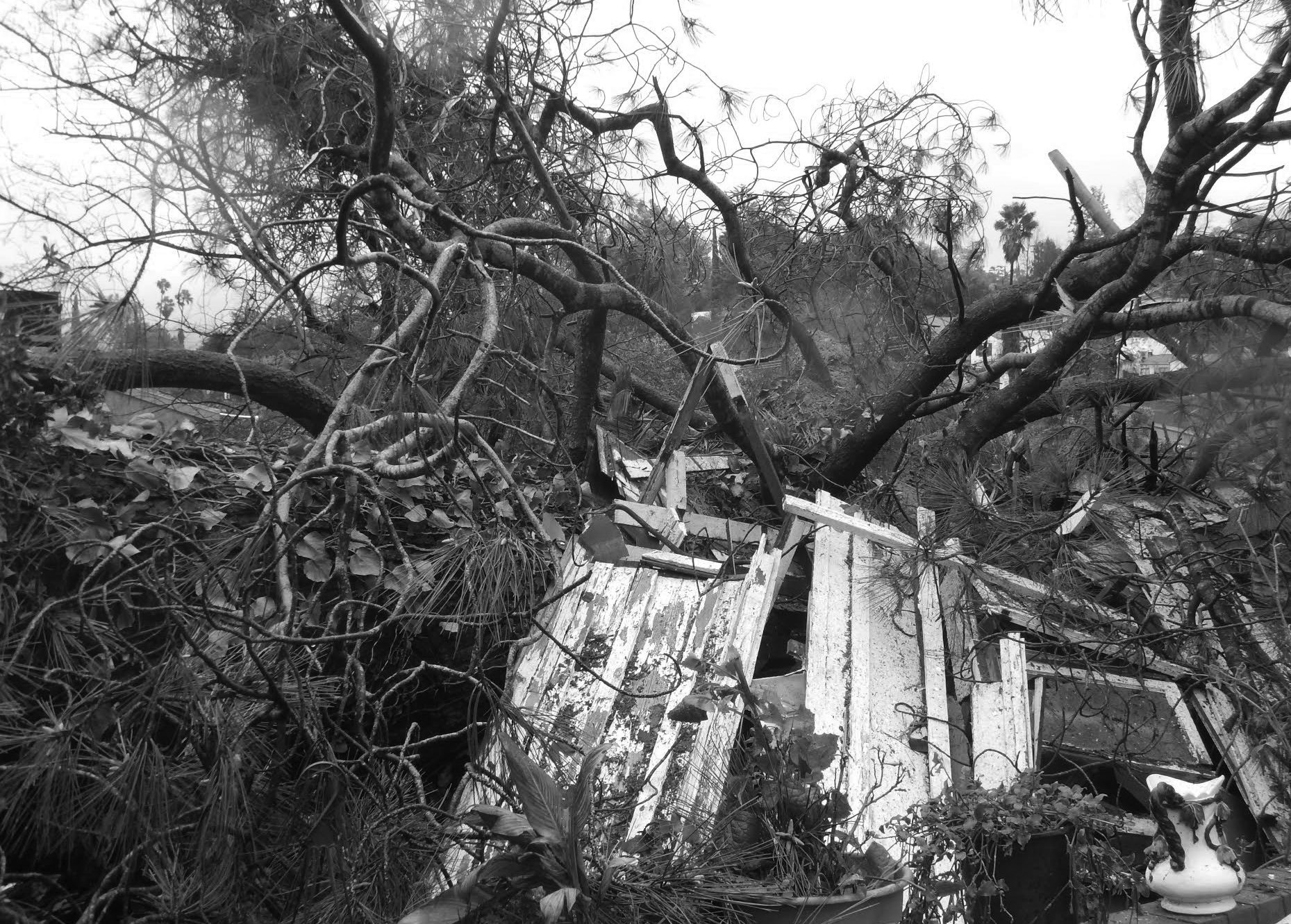 A Torrey Pine with an 8-foot wide trunk demolished a small cottage during Feb. 1's powerful windstorms. The tree crushed the one-bedroom cottage, but missed the historic two-story Pritchett House built in the 1880s.