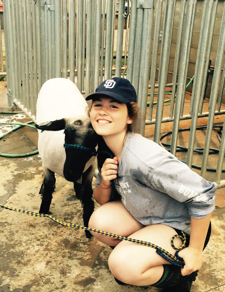 Tori Pedersen, Head Sheep Intern. She is a junior at EHS.