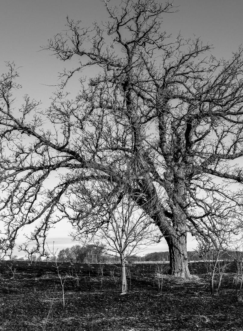 A burned tree.
