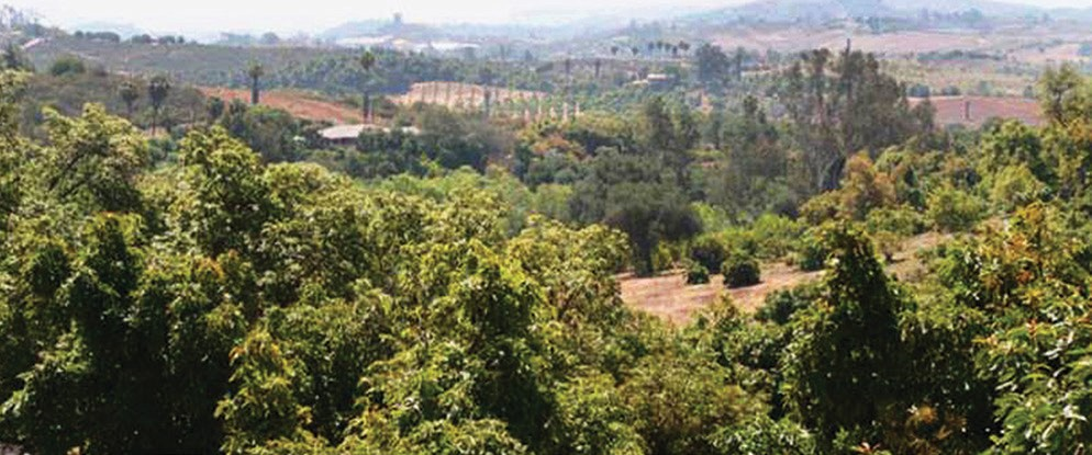 A view of the land where the Accretive Group would like to build Lilac Hills Ranch. Photo courtesy of San Diego County