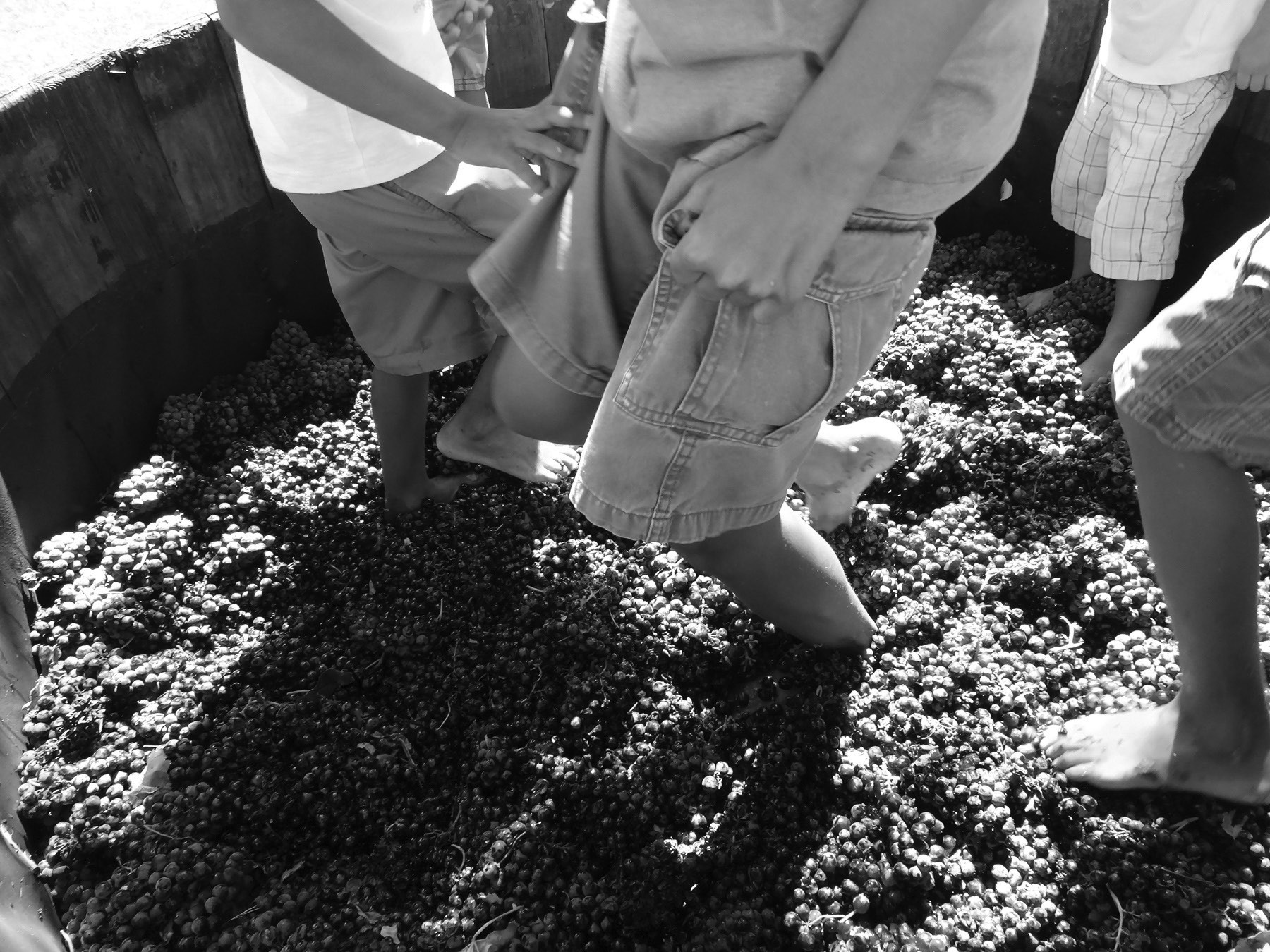 Grape stomping will be one of the fun activities at the October 1st Grape Day Discovery Festival at Grape Day Park.