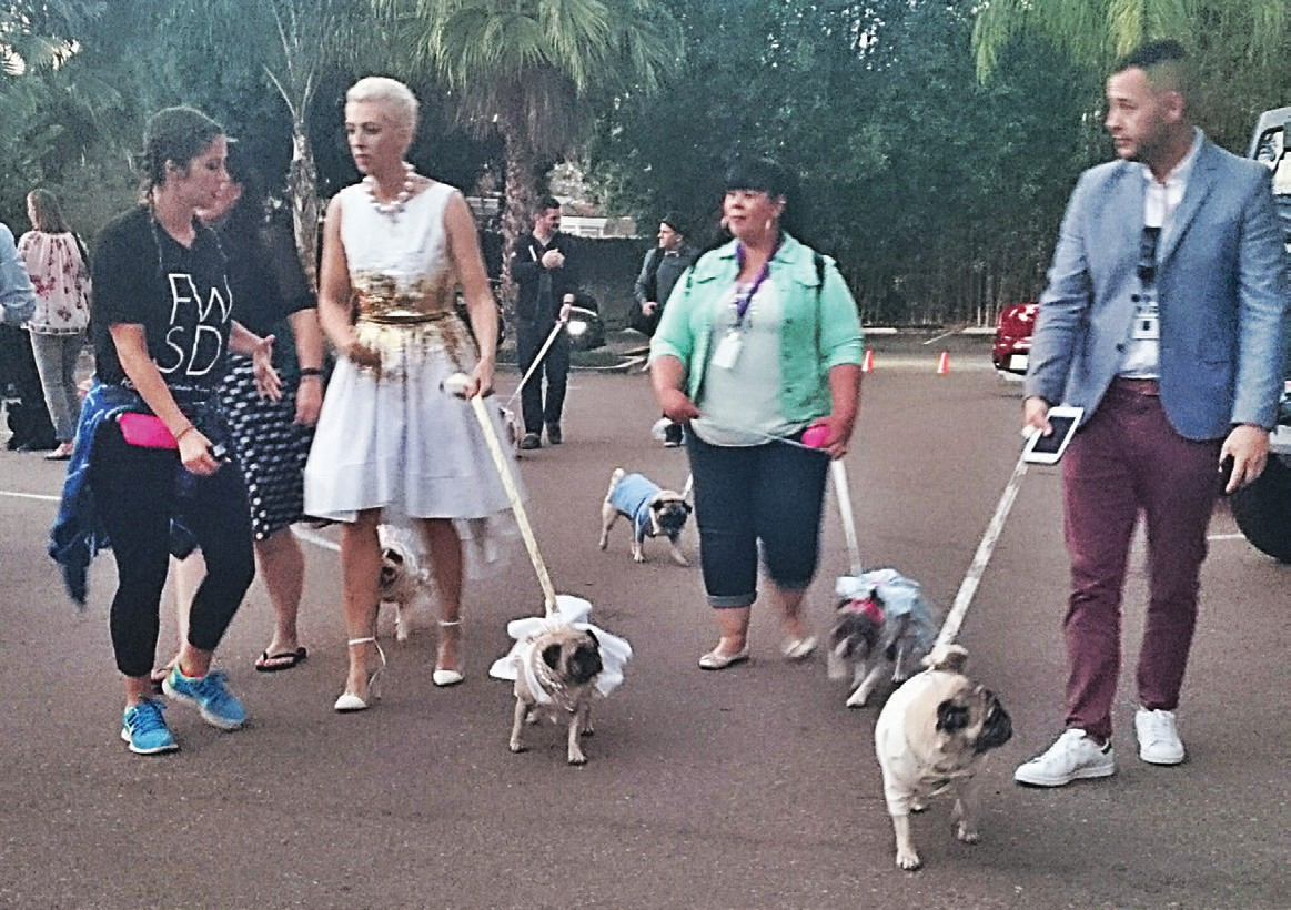 Celebrity pugs brought together to show off the fashions of The Stylish Bisou. Photos by Anne Hall